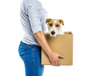 senior relocation company